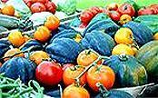 veggiessm.jpg