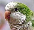 parrotstock108